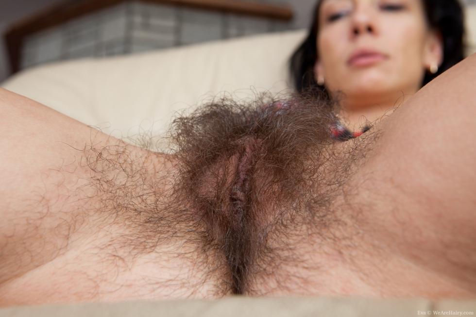 Hairy hairy bush hirsute